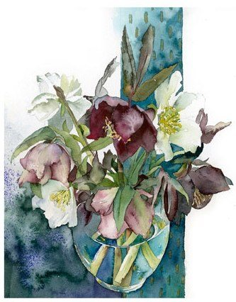 violet, mauve and white hellebores