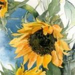 watercolour sunflowers