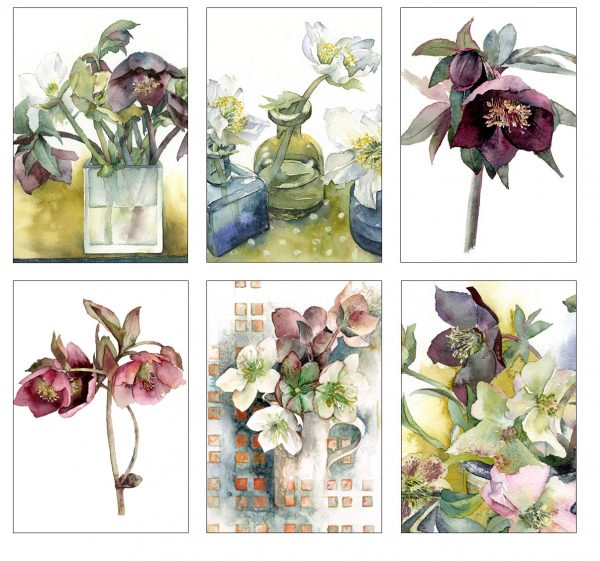 Hellebore Collection