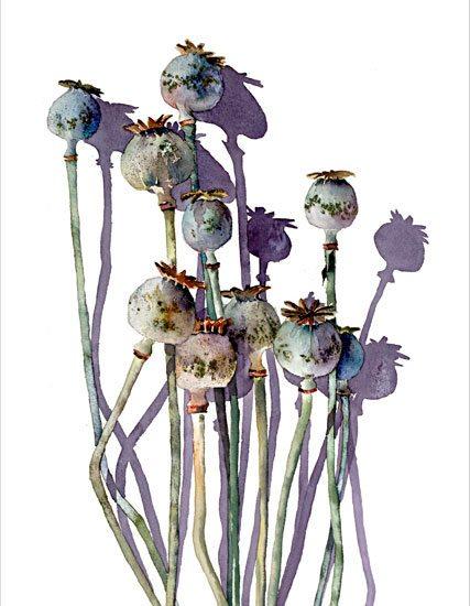 New-Poppyheads