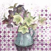 Last of the Hellebores