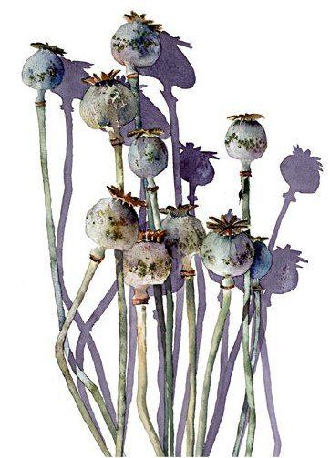 simple poppyheads watercolour