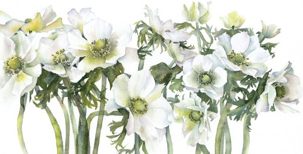 A-Row-of-White-Anemones