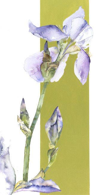Blue Iris 1 web