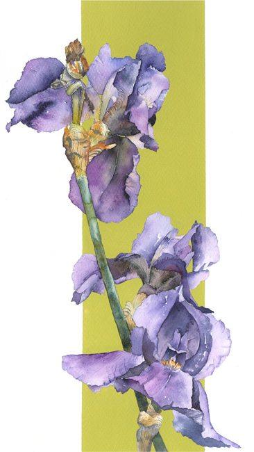 Blue Iris 2 web