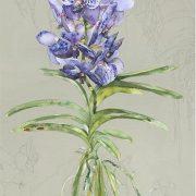 Blue Vanda copy