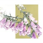 Foxgloves web jpg
