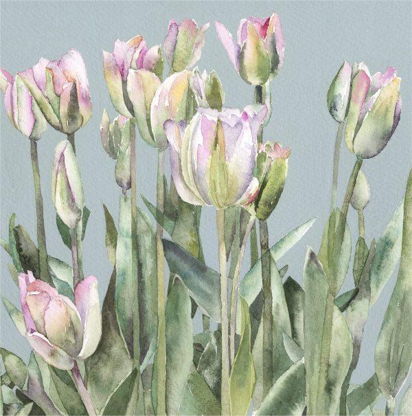 Tulips FS