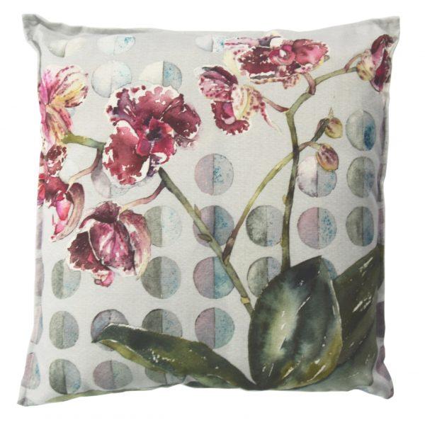Margos Orchid ok