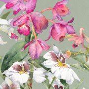 AC Kews Orchids